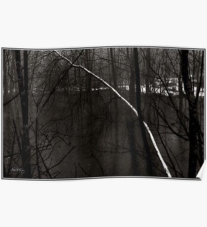 Birch in an Alder Swamp Poster