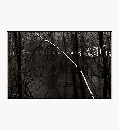 Birch in an Alder Swamp Photographic Print