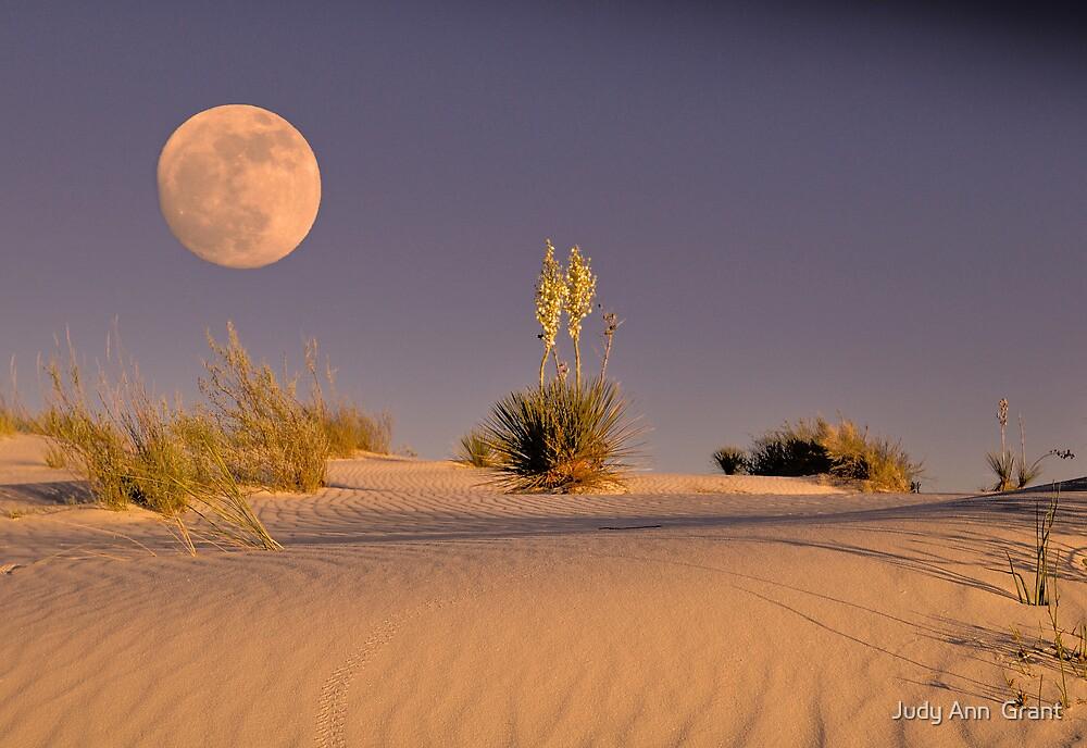 Sand Dunes Heaven  by Judy Ann  Grant