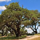 Gnarly Oaks of Austin, Texas by ArtCooler
