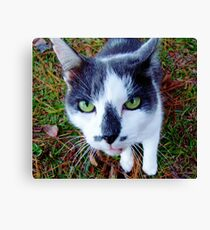 Green Eyed Pussy Cat Canvas Print