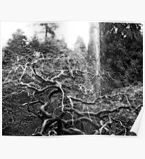 Briar - Japanese Gardens, Portland, OR Poster
