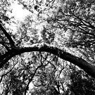 tronc d'arbre arc by james smith