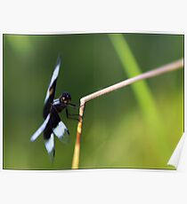 Lensbaby Dragonfly Poster