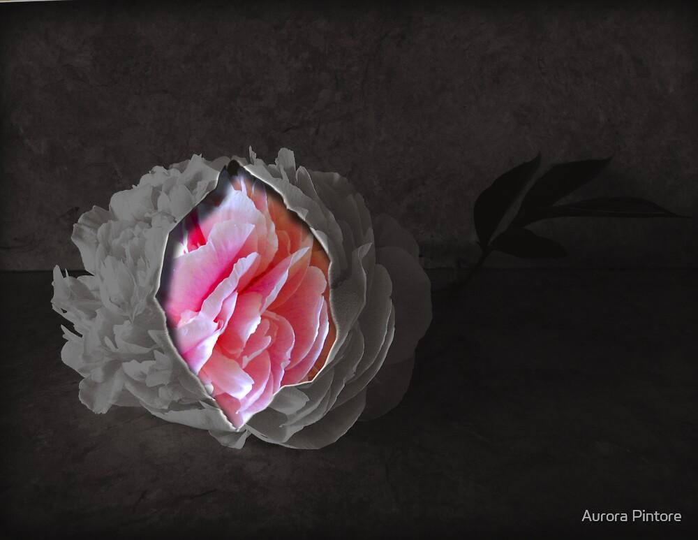 UN FIORE by Aurora Pintore
