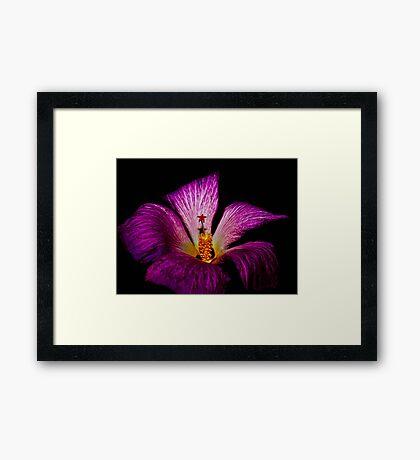 Little Star Flower Framed Print