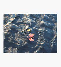 Muskoka Photographic Print