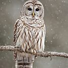 Barred Owl in heavy snowfall by Greg Schneider