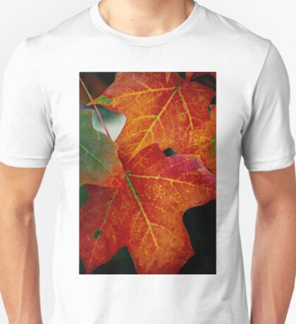 Fall leaves......My favorite time of year.. T-Shirt