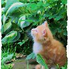 Keep Looking Up, Kitty! by teresa731