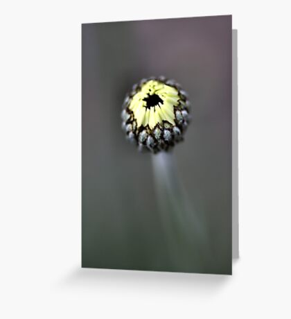 Young Bud - African Eyes Greeting Card