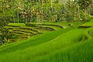 Tiered Rice Fields by Werner Padarin