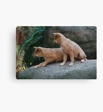 Undivided Attention Canvas Print