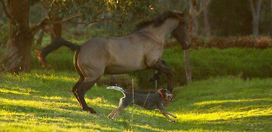Tally and Frodo Running Free by JaanaWilson