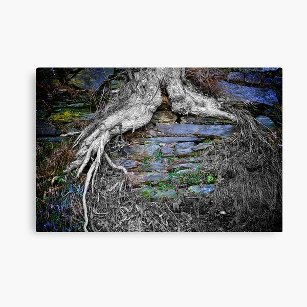 Grown-in Canvas Print