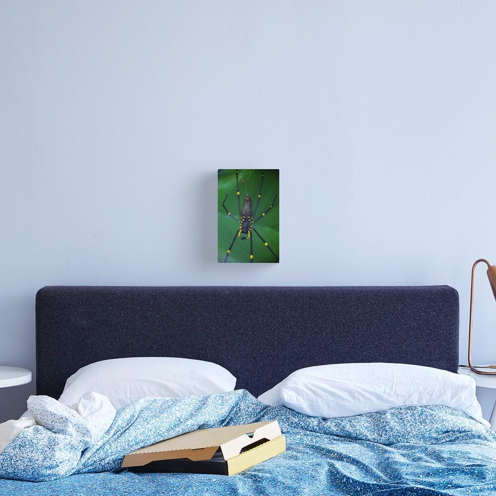 Golden Silk Orb-Weaver Canvas Print