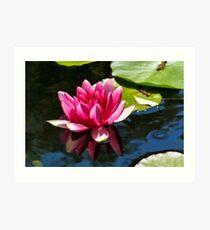 Water Lily ~ Abbotsbury Gardens Art Print