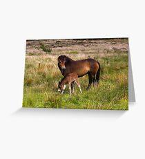 Exmoor Pony & Foal Greeting Card
