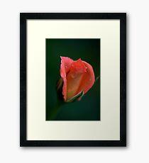 Julie Andrews Framed Print