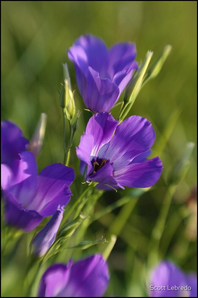 Wildflower Purple by Scott Lebredo