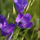 Wildflower Purple by Scott Lebredo