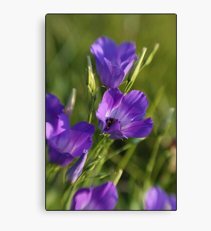 Wildflower Purple Canvas Print