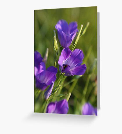 Wildflower Purple Greeting Card