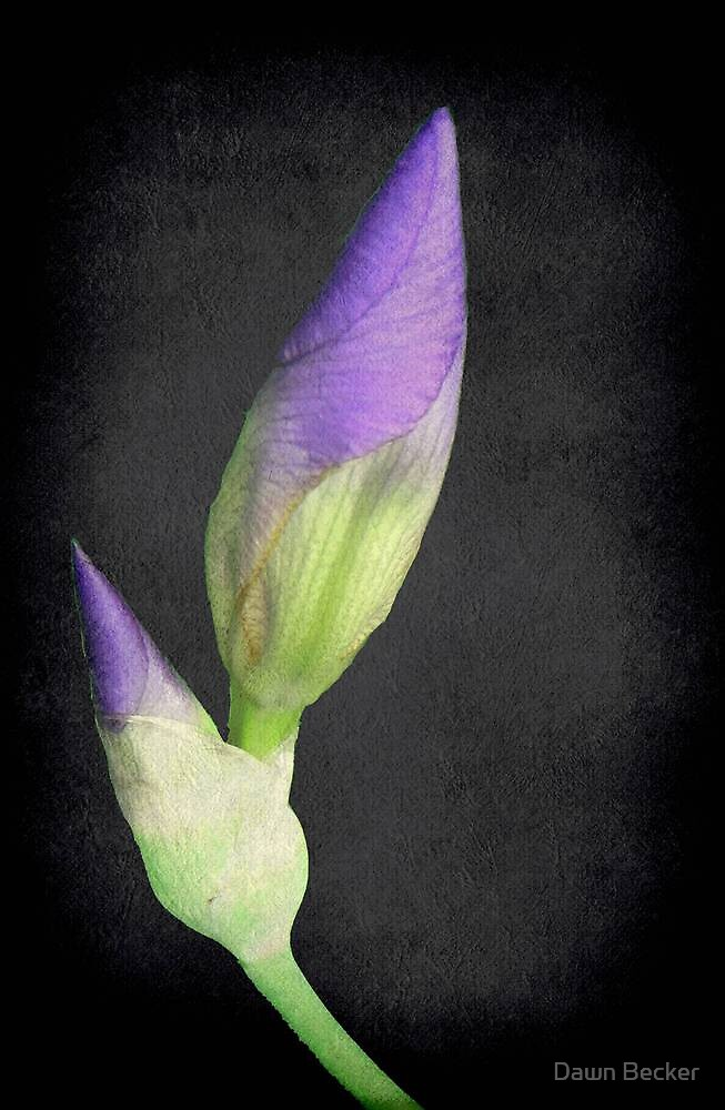 Popping Up Irises ©  by Dawn Becker