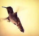 Hummingbird  by Joshua Greiner