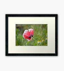 Little Poppy Framed Print