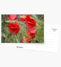 Poppies Postcards