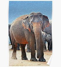 Painted Elephant in the Desert Poster