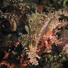 Scorpionfish close up, Lembeh by shellfish