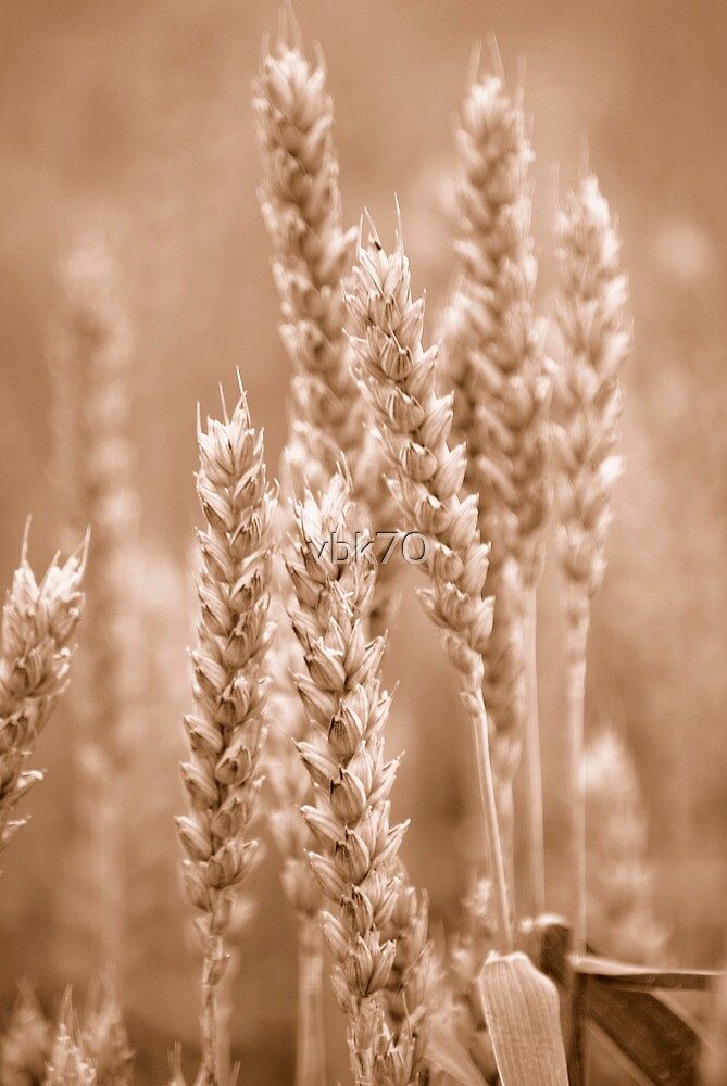 Wheat Sepia by vbk70