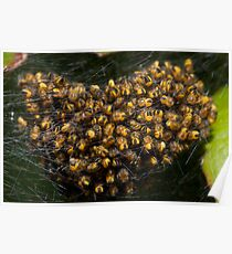 spiderlings Poster