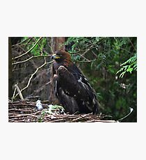 Golden Eagle Photographic Print