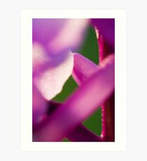 Early Purple Orchid Art Print