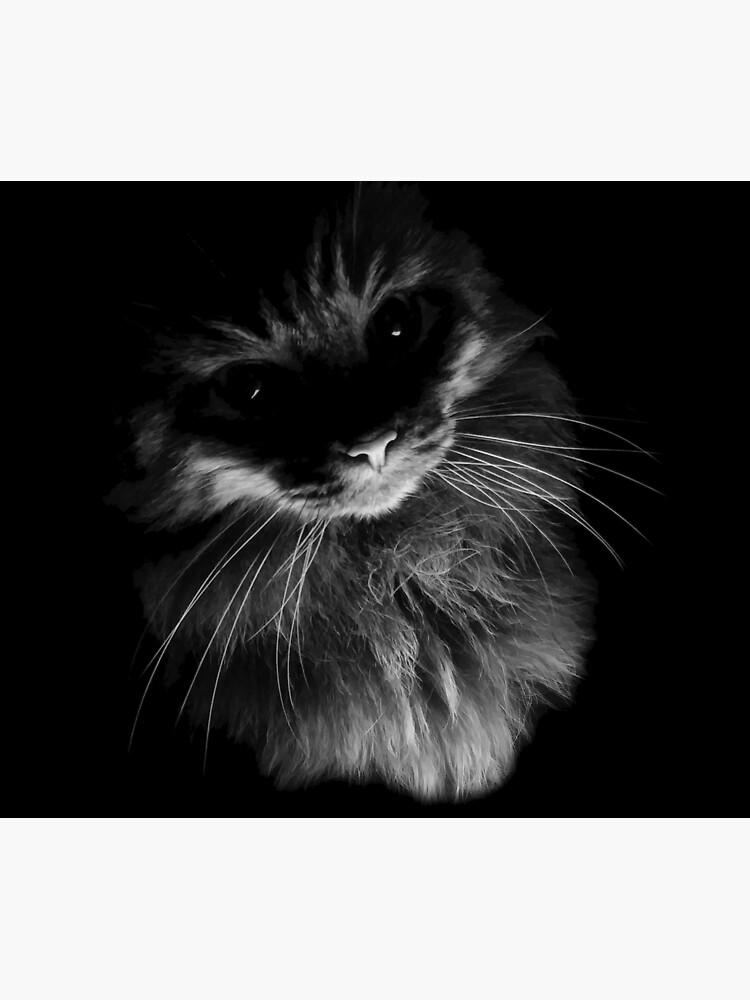 Drama Cat by Etakeh