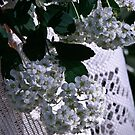 White Spirea On Lace by jules572