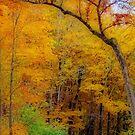 Autumn Peak Colors by kkphoto1