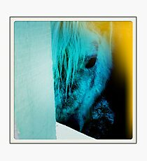 equine eyes Photographic Print