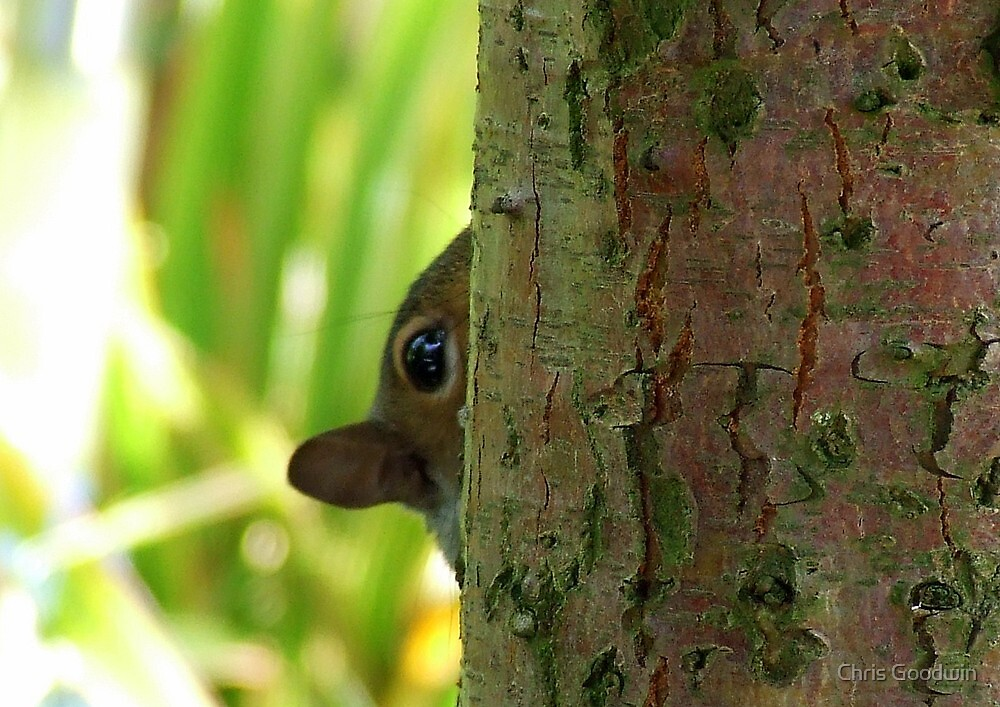 Hide 'n' Seek by Chris Goodwin