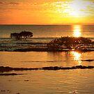 Mangrove Gold by Kym Howard