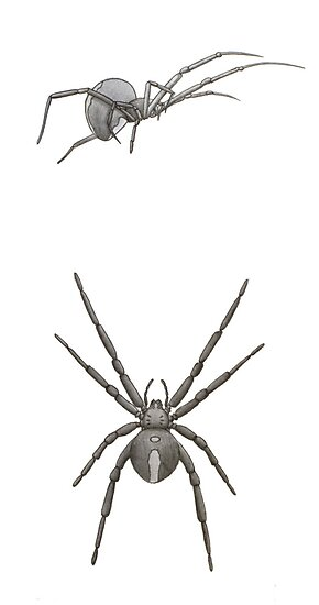 Redback Spider by axemangraphics