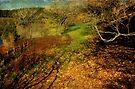 """Autumn Woodland"" by Heather Thorning"