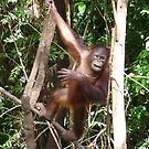Is this the way to the banana tree? I'm tired of leaves. by machka