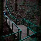 Big Forest, Little Steps by Tatiana R