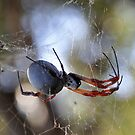 Orb Spider by Leigh Monk