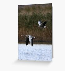 Greylag  Greeting Card