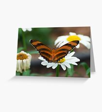 Banded Orange Greeting Card